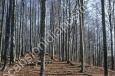alberi_montello_scansioni_diapositive