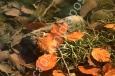scansionidiapositive_004_piccolo_stagno