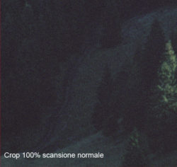 crop_1x
